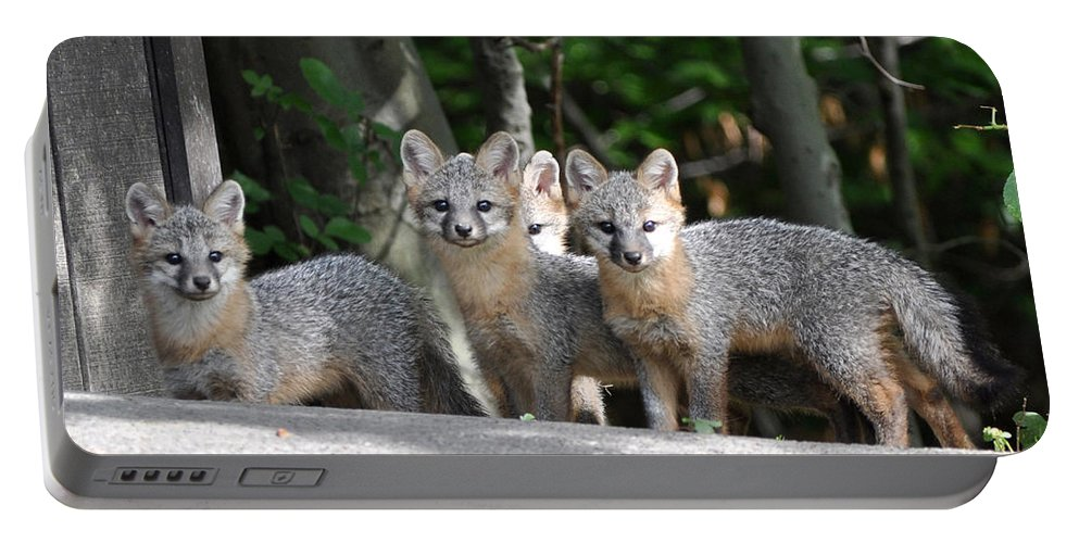 Kit Fox Portable Battery Charger featuring the photograph Kit Fox9 by Torie Tiffany