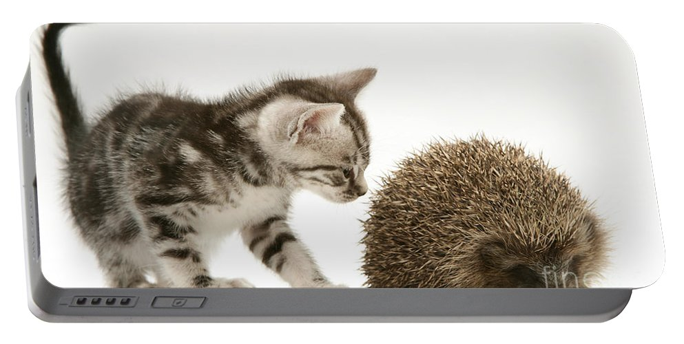 Tabby Portable Battery Charger featuring the photograph Kitten Inspecting Hedgehog by Jane Burton