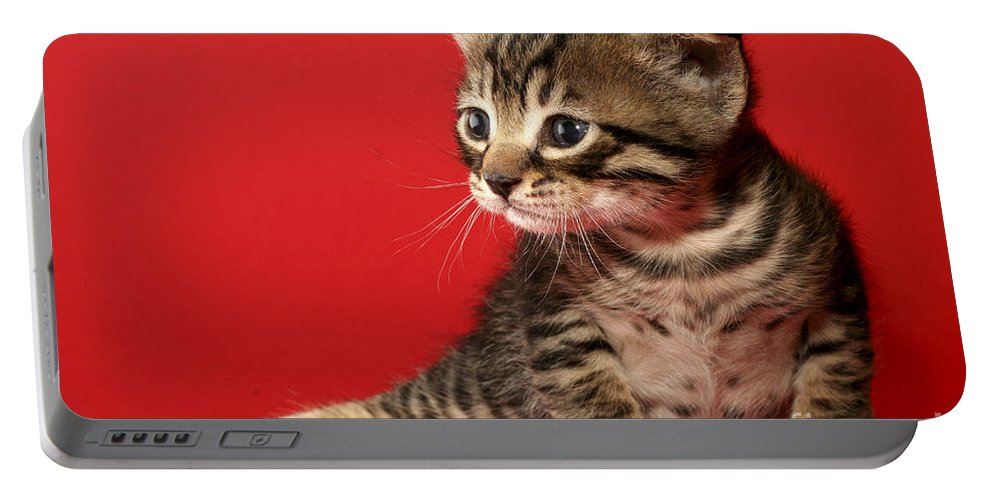 Cat Portable Battery Charger featuring the photograph Kitten On Red by Yedidya yos mizrachi