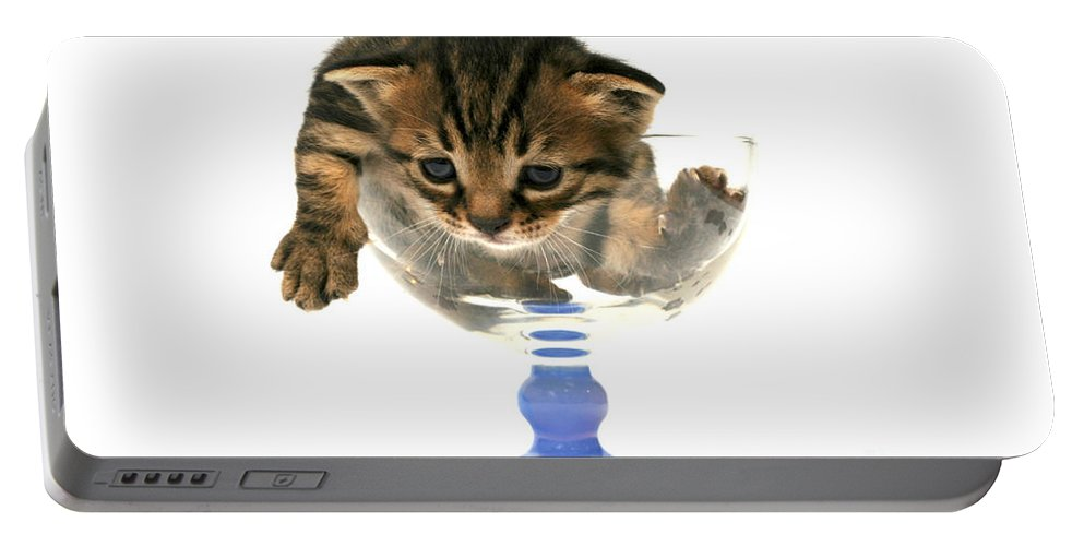 Cat Portable Battery Charger featuring the photograph Kitten Sits In A Glass by Yedidya yos mizrachi