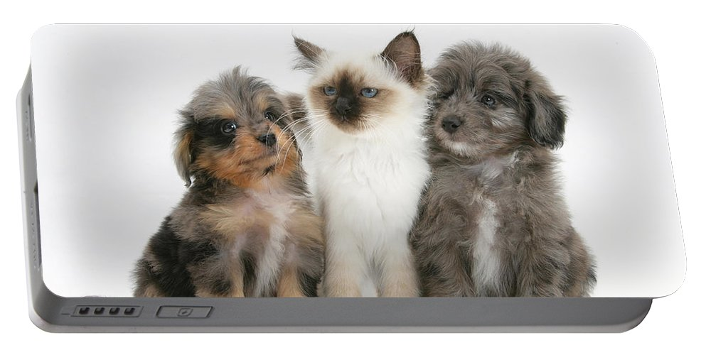 Animal Portable Battery Charger featuring the photograph Kitten With Puppies by Mark Taylor