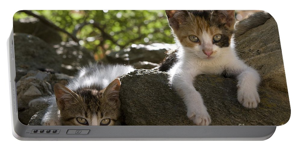 Cat Portable Battery Charger featuring the photograph Kittens On A Wall by Jean-Louis Klein & Marie-Luce Hubert