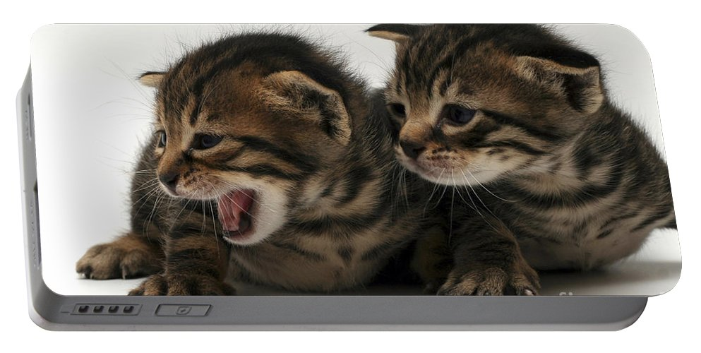 Cat Portable Battery Charger featuring the photograph Kittens by Yedidya yos mizrachi