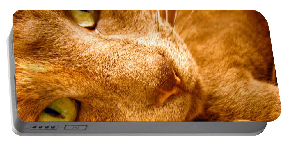 Cats Portable Battery Charger featuring the photograph Kitty by Amanda Barcon