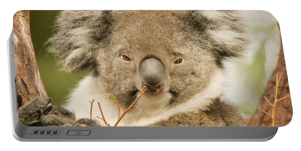 Koala Portable Battery Charger featuring the photograph Koala Snack by Mike Dawson