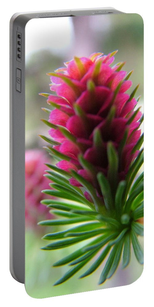 Flower Portable Battery Charger featuring the photograph Korean Pine by Peter Antos