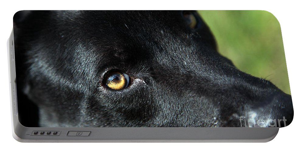 Lab Portable Battery Charger featuring the photograph Lab Mix by Amanda Barcon