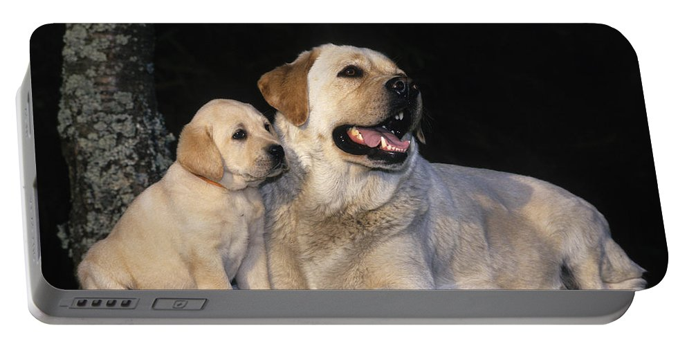 Labrador Retriever Portable Battery Charger featuring the photograph Labrador Retrievers by Jean-Louis Klein & Marie-Luce Hubert