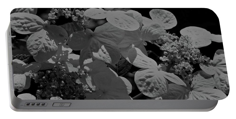 Flower Portable Battery Charger featuring the photograph Lace Cap Hydrangea In Black And White by Smilin Eyes Treasures