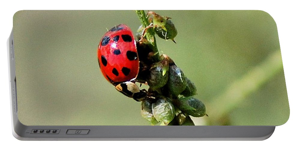 Landscape Portable Battery Charger featuring the photograph Lady Beetle by David Lane