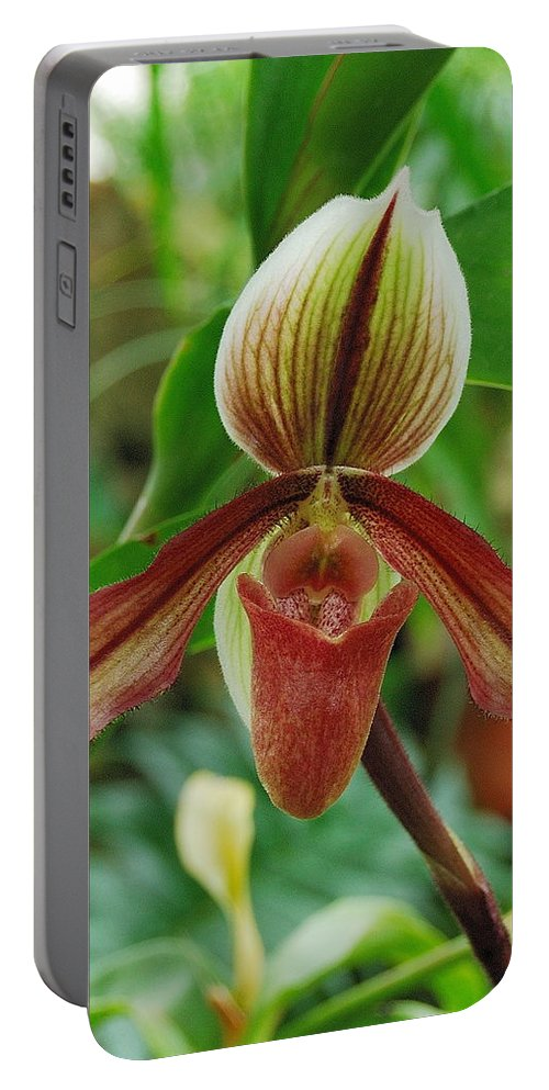 Orchids Portable Battery Charger featuring the photograph Lady Slipper by Michael Peychich