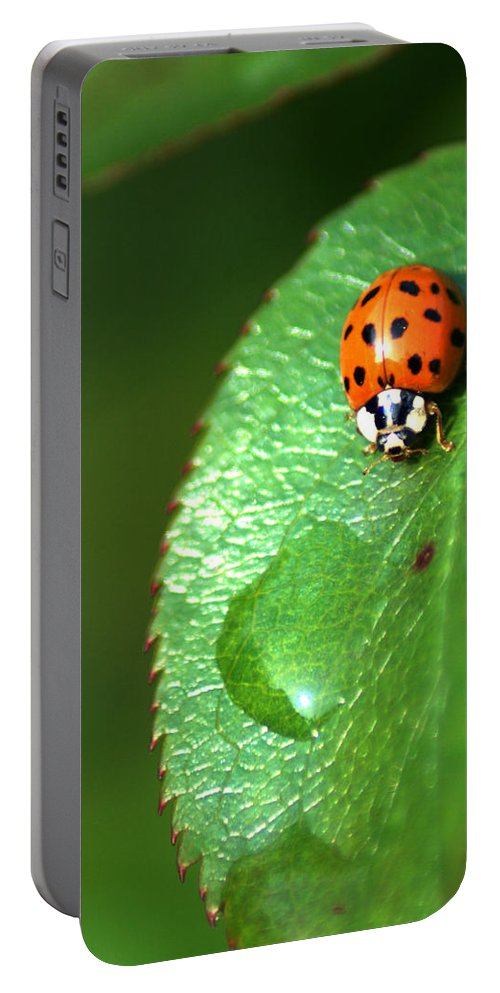 Ladybird Portable Battery Charger featuring the photograph Ladybird by Chris Day