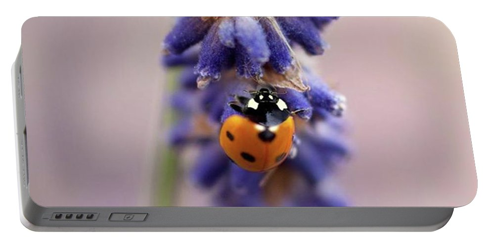 Ladybug Portable Battery Charger featuring the photograph Ladybird On Norfolk Lavender  #norfolk by John Edwards