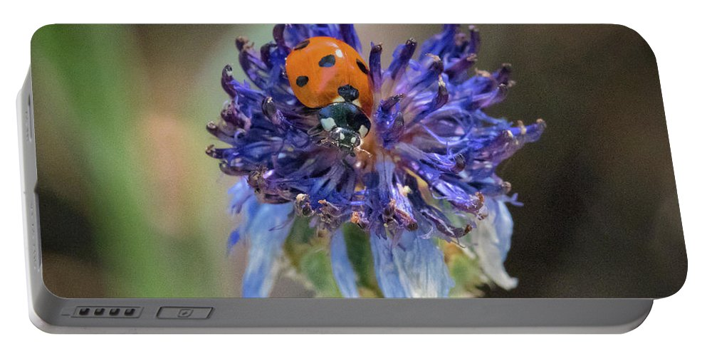 Ladybug Portable Battery Charger featuring the photograph Ladybug On Purple Flower by Mitch Shindelbower