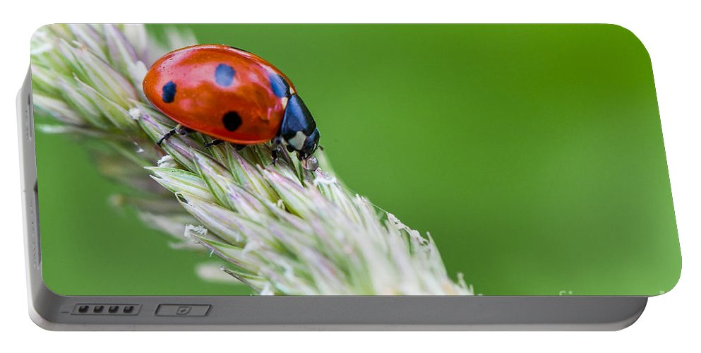 Ladybug Portable Battery Charger featuring the photograph Ladybug by Valerio Poccobelli