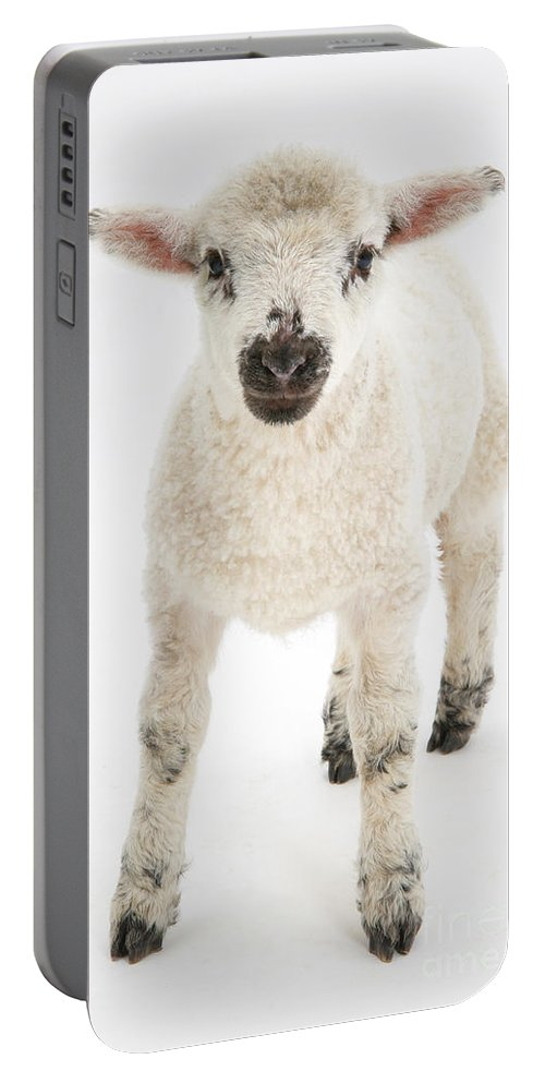 Nature Portable Battery Charger featuring the photograph Lamb Standing by Mark Taylor