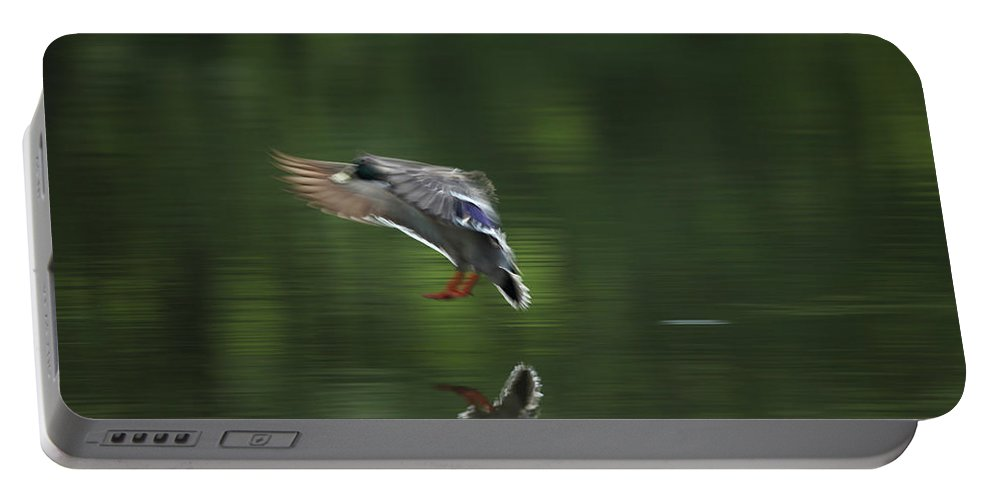 Mallard Portable Battery Charger featuring the photograph Landing by Karol Livote