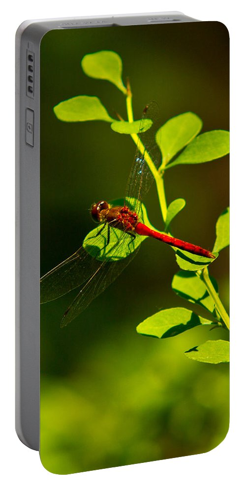 Insects Portable Battery Charger featuring the photograph Landing Pad by Frank Pietlock