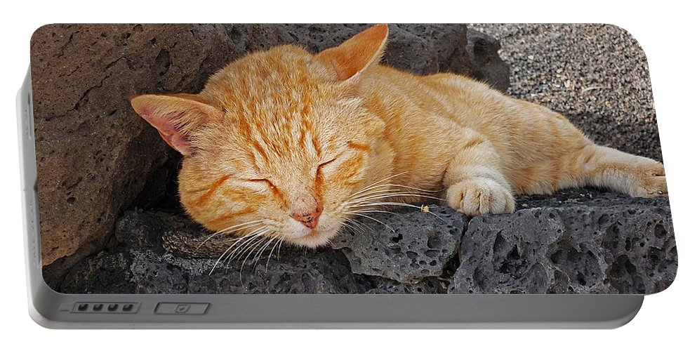 Cat Portable Battery Charger featuring the photograph Lanzarote Ginger by Charles Stuart