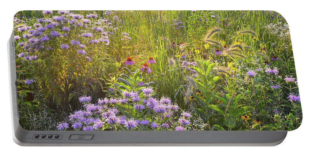 Black Eyed Susan Portable Battery Charger featuring the photograph Last Rays Of Sun Light Wildflowers In Moraine Hills Sp by Ray Mathis