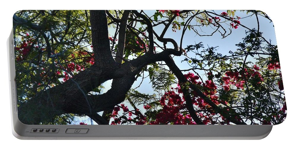 Linda Brody Portable Battery Charger featuring the photograph Late Afternoon Tree Silhouette With Bougainvilleas I by Linda Brody