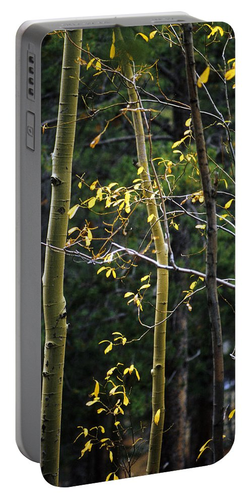Aspen Portable Battery Charger featuring the photograph Late Aspen by Jerry McElroy