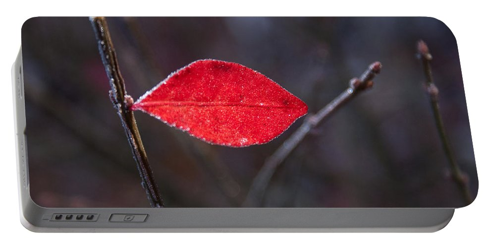 Read Portable Battery Charger featuring the photograph Lateral Red Leaf by Douglas Barnett