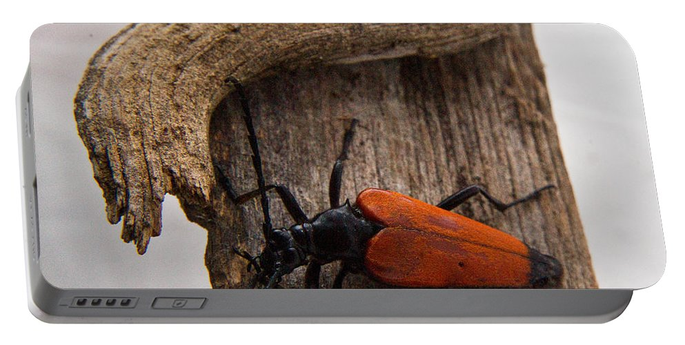 Laughing Portable Battery Charger featuring the photograph Laughing Beetle by Douglas Barnett