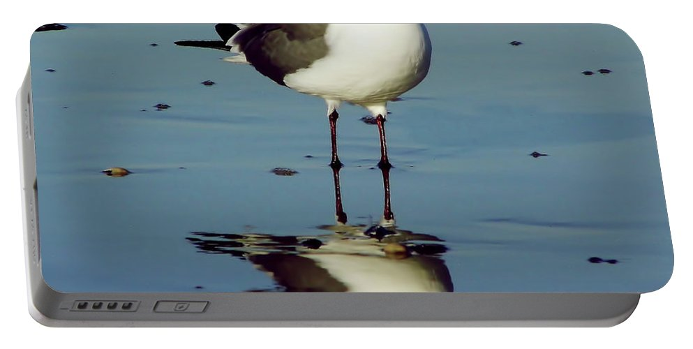 Bird Portable Battery Charger featuring the photograph Laughing Gull by D Hackett