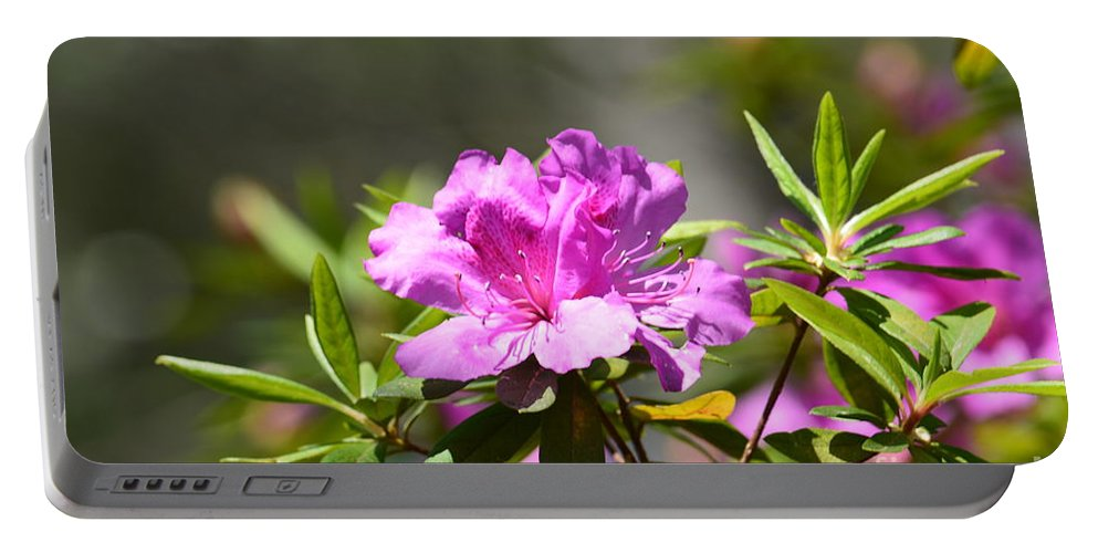Lavender Rhododendron Portable Battery Charger featuring the photograph Lavender Rhododendrun by Maria Urso