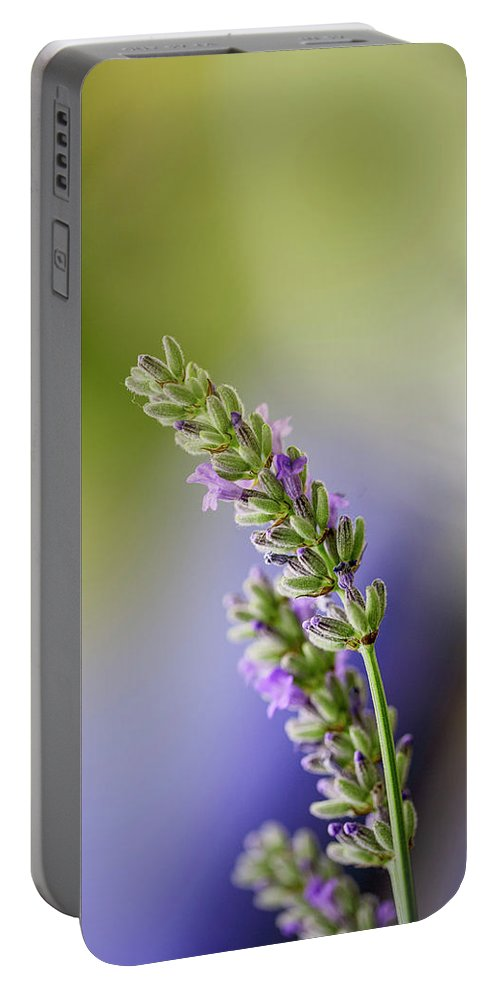 Lavender Portable Battery Charger featuring the photograph Lavender by Nailia Schwarz