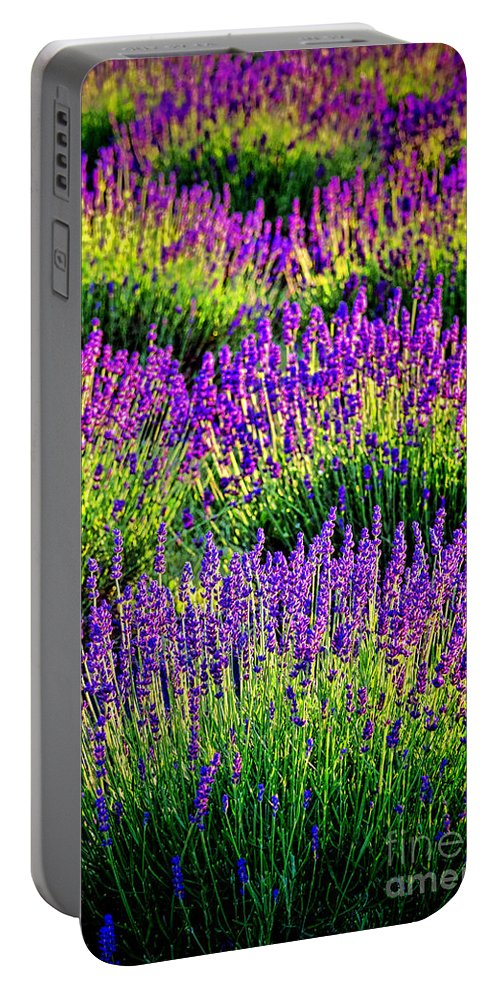 Lavender Portable Battery Charger featuring the photograph Lavenderous Harmony by Olivier Le Queinec