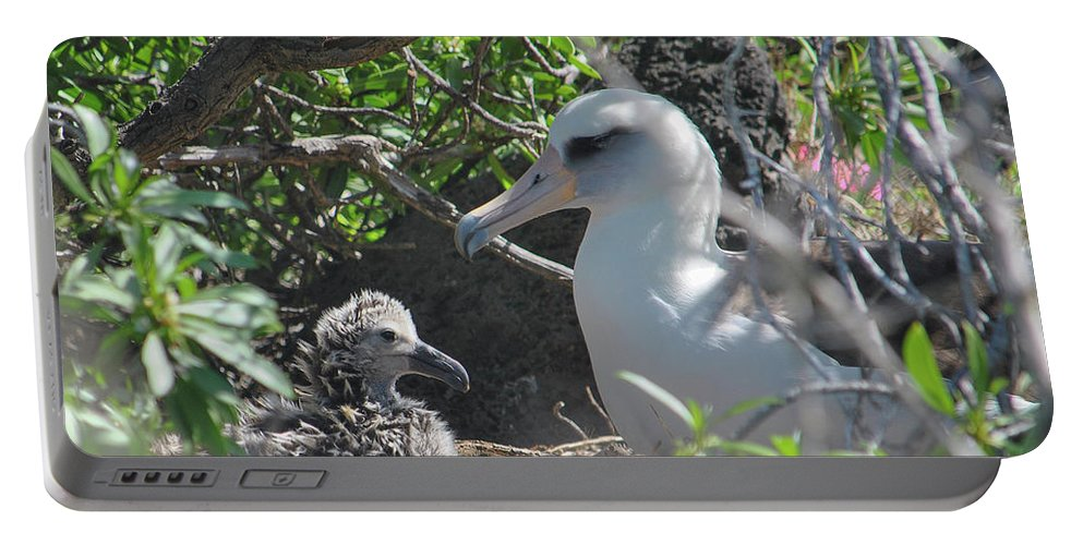 Laysan Albatross Portable Battery Charger featuring the photograph Laysan Albatross Chick by Megan Martens