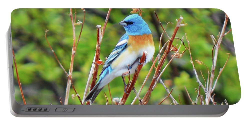 Bird Portable Battery Charger featuring the photograph Lazuli Bunting by Tracie Fernandez
