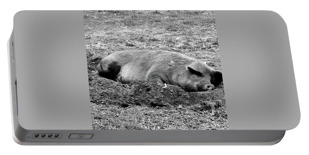 Animals Portable Battery Charger featuring the photograph Lazy Hog by Shawna Walker
