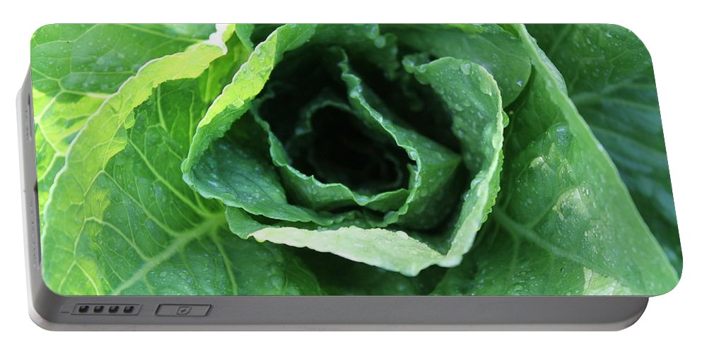 Lettuce Portable Battery Charger featuring the photograph Leaf Lettuce Part 2 by Lauri Novak
