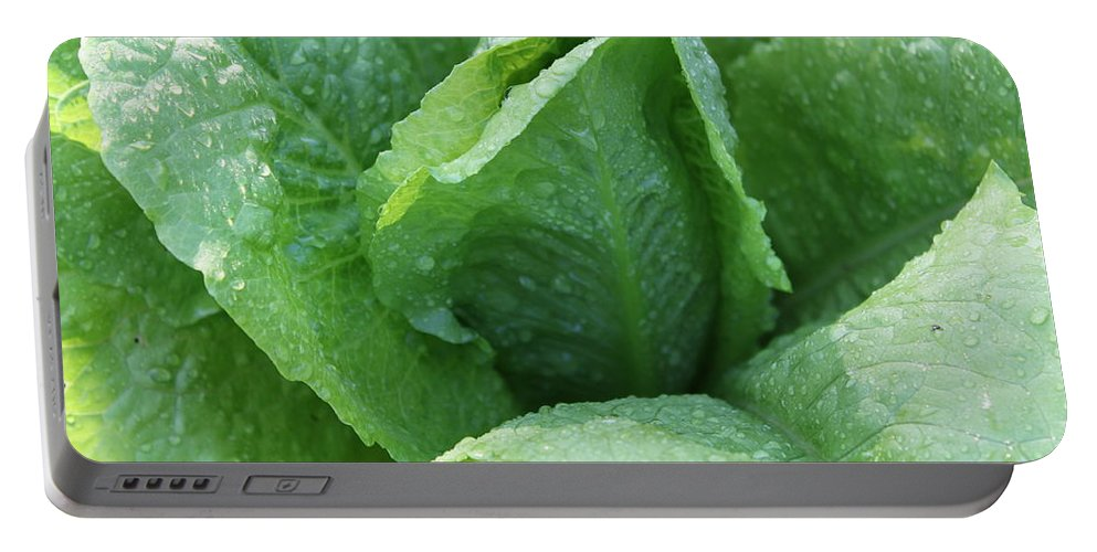 Lettuce Portable Battery Charger featuring the photograph Leaf Lettuce Part 3 by Lauri Novak