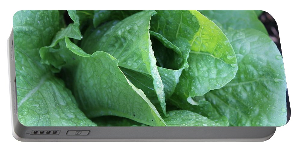Lettuce Portable Battery Charger featuring the photograph Leaf Lettuce Part 4 by Lauri Novak