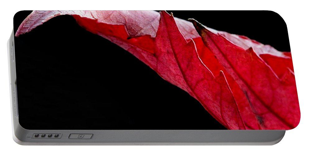 Macro Portable Battery Charger featuring the photograph Leaf Study IIi by Lauren Radke