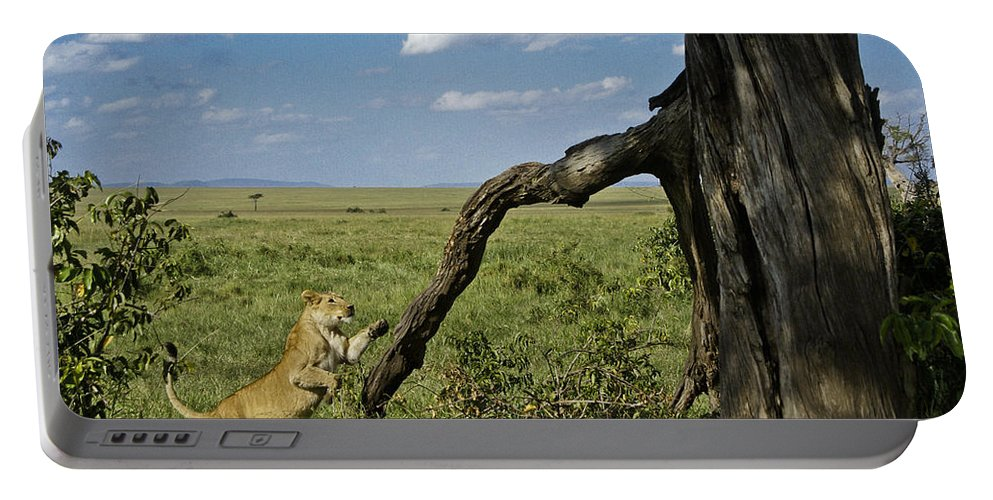 Africa Portable Battery Charger featuring the photograph Leaping Lion by Michele Burgess