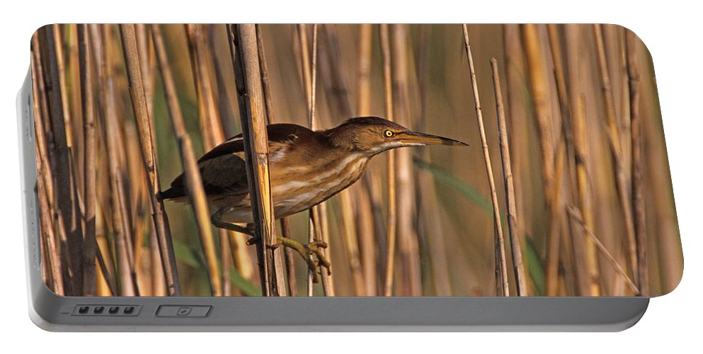 Least Bittern Portable Battery Charger featuring the photograph Least Bittern by John Harmon