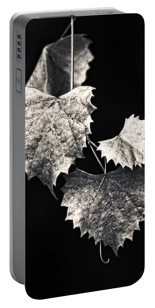 B&w Portable Battery Charger featuring the photograph Leaves by Christopher Holmes