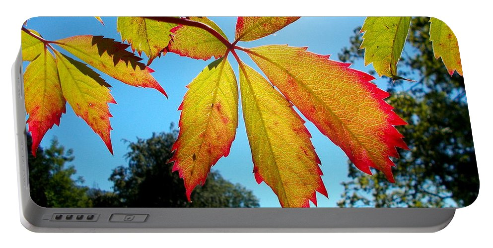 Leaves Portable Battery Charger featuring the photograph Leaves In Sunlight 4 by Angelika Heidemann