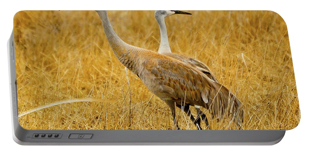 Sandhill Crane Portable Battery Charger featuring the photograph Left Or Right by Greg Norrell
