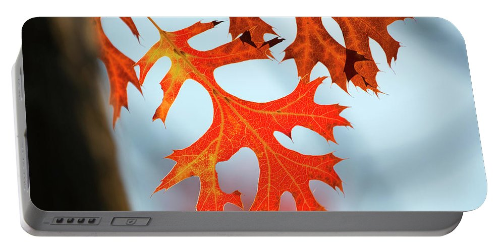 Fall Color Portable Battery Charger featuring the photograph Leif Superhighway by Susan Wright