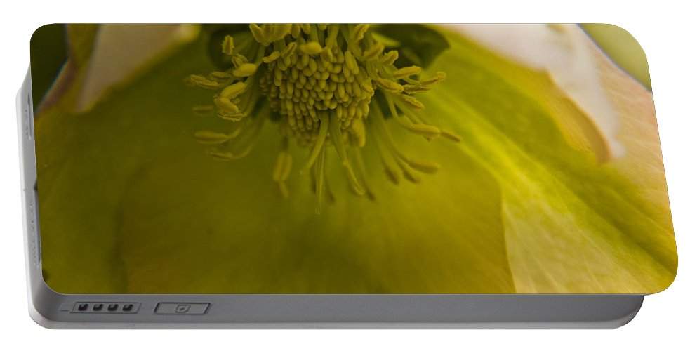 Flower Portable Battery Charger featuring the photograph Lenten Rose Interior by Teresa Mucha