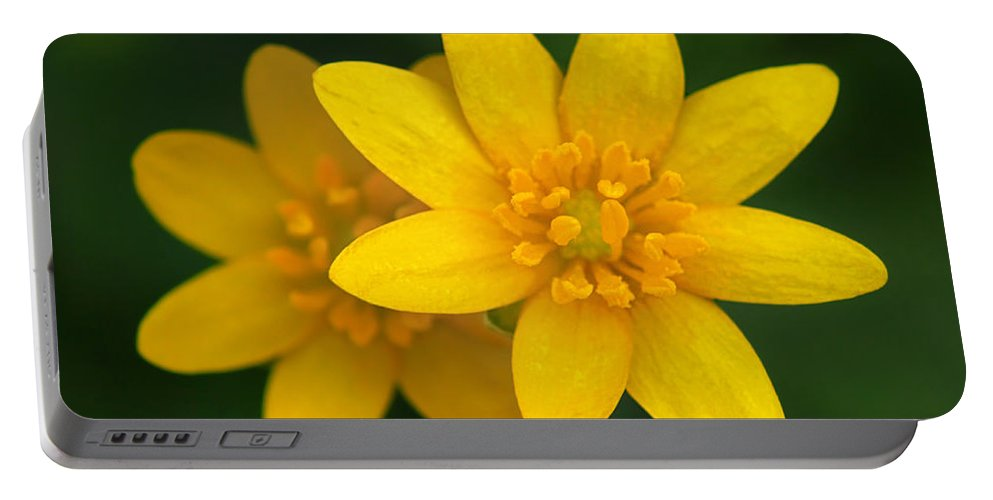 Lesser Celandine Portable Battery Charger featuring the photograph Lesser Celandine by Carolyn Derstine