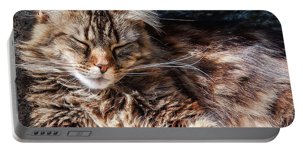 Cat Portable Battery Charger featuring the photograph Let Me Sleep... by Geoff Smith