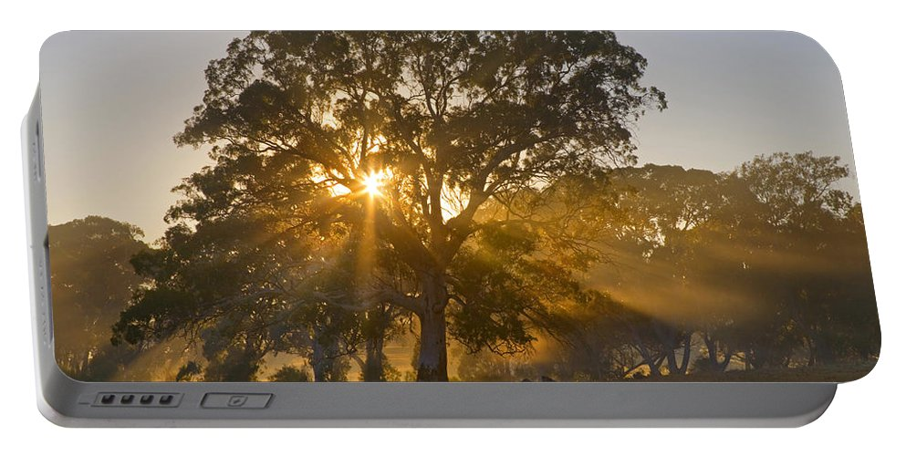 Tree Portable Battery Charger featuring the photograph Let There Be Light by Mike Dawson