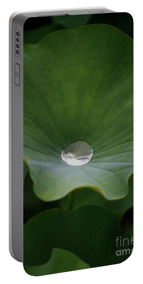 Plant Portable Battery Charger featuring the photograph Life by Richard Rizzo